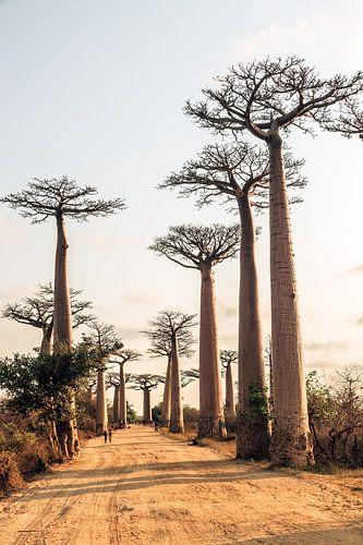 Laan van de Baobabs van Dennis van de Water