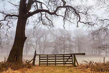 Herfst in de Smeerling. van Ton Drijfhamer