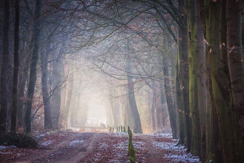 Bospad op Dwingelderveld in het vroege zonlicht. sur Anneke Hooijer