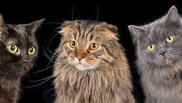 Katten van Tony Wuite