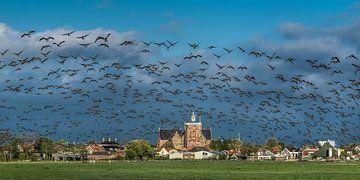 Ganzenvlucht boven de Friese stad Workum vlak achter de IJsselmeerdijk  in het zuidwesten van Friesl van Harrie Muis