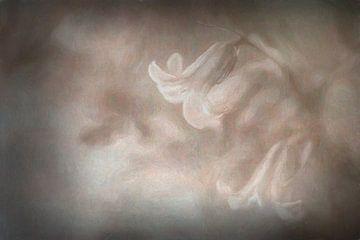 Romantische voorjaarsbloeier van Francis Dost
