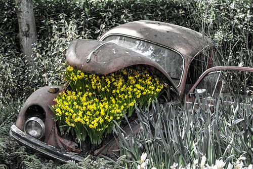 Old Beetle with flowers von Lindi Hartman
