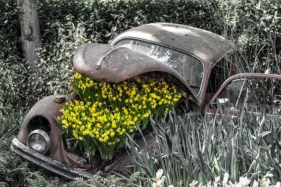 Oude Kever met bloemen