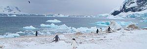 wijds uitzicht over de arctische zee