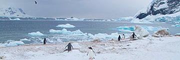 wijds uitzicht over de arctische zee van Eric de Haan