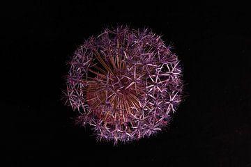 Blume von oben von Roland de Zeeuw fotografie