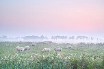 Dutch tranquility van Olha Rohulya