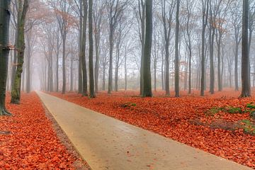 Fietspad door het herfstbos van