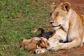 Leeuwin met welpen van Peter Michel
