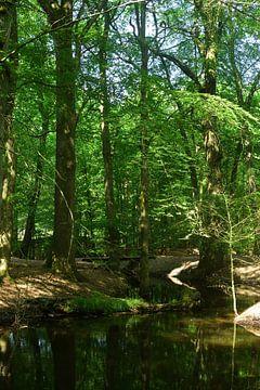 Een beek in het bos van Gerard de Zwaan