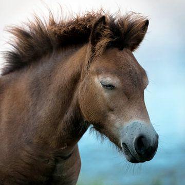 pony sur Birgitta Tuithof