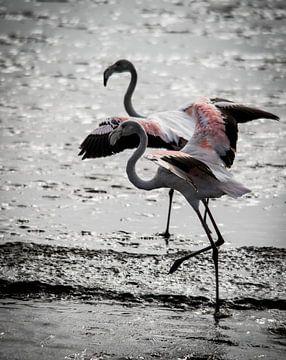 Flamingo in tegenlicht van Steven Symoens