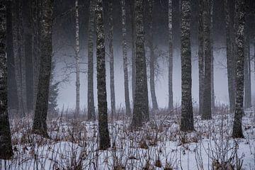 Bos in de mist. van Ingrid van Wolferen