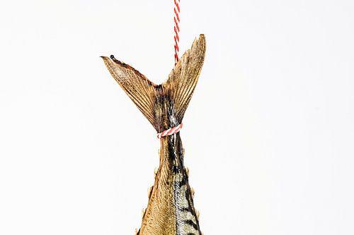Hangende makrelen staart