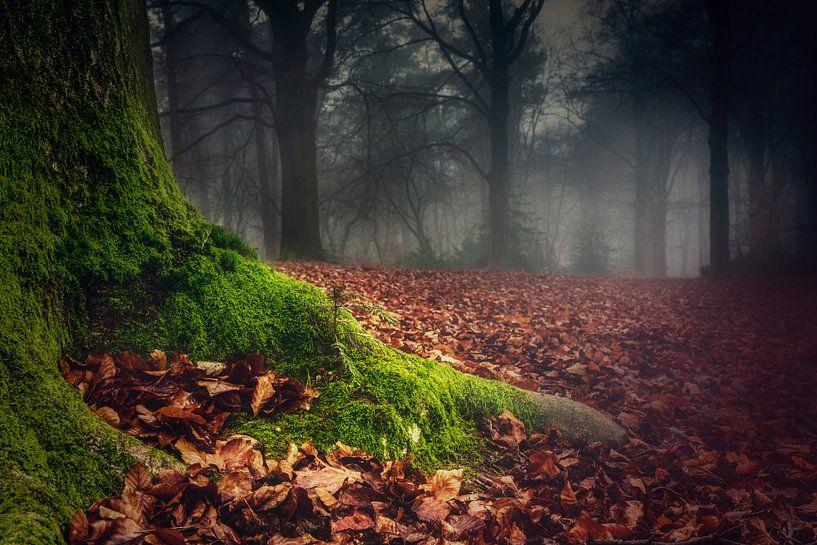 Forest floor van Joost Lagerweij