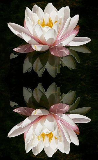 Waterlelie reflexie van Peter Zwitser