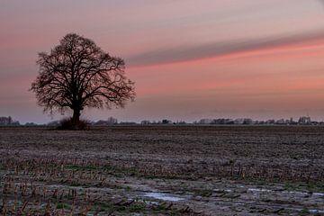 Trostloser Baum von Evy De Wit