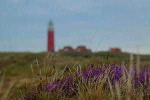 Bloeiende heide op Texel