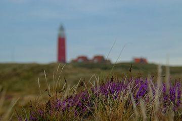 Bloeiende heide op Texel van