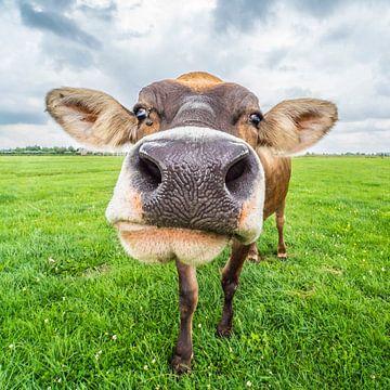 Nederlandse koe van Fred Leeflang