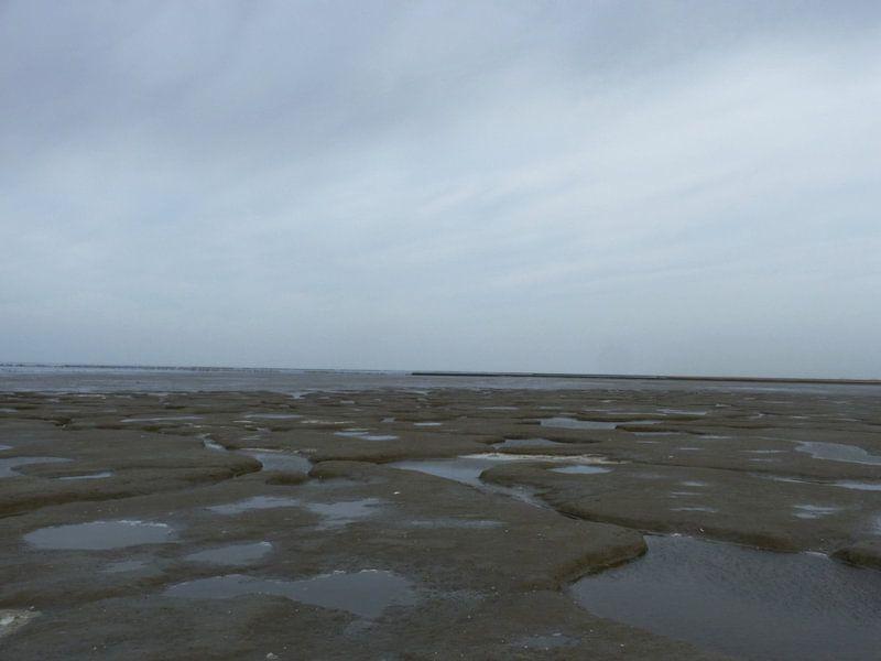 9. Landschap, natuurgebied,  kwelder  Noarderleech , waddenzee van Alies werk