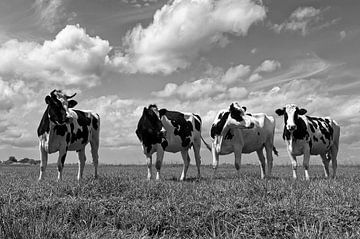 Vaches dans le polder sur Peter Bongers