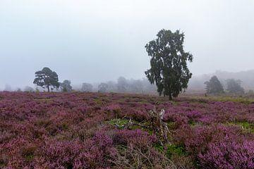 heidevelden in de mist