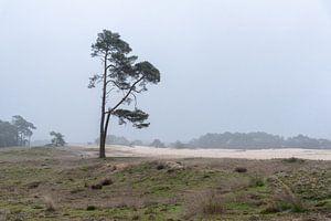 Wekeromse Zand in de ochtend van