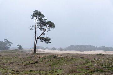 Wekeromse Zand in de ochtend von Cilia Brandts