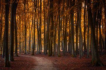Orange Woods van Bart Hendrix