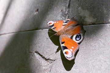 Vlinder op muur van Harry Wedzinga
