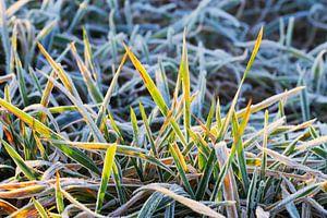 Weide met rijp bij zonsopgang 1 van Jörg Hausmann