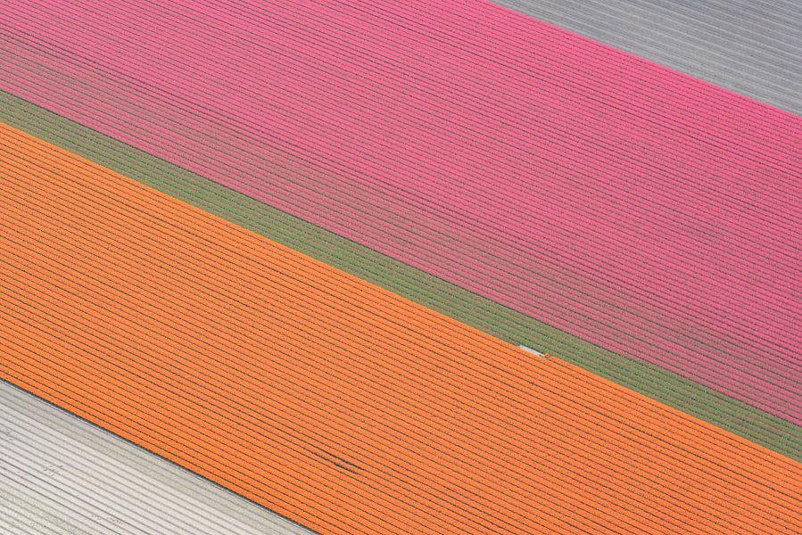 Tulpenvelden in de polder in het voorjaar van Sjoerd van der Wal