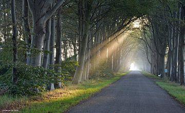 Eerste zonnestralen in de vroege ochtend van Jitske Van der gaast