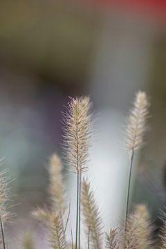 Plant von Tomas S.