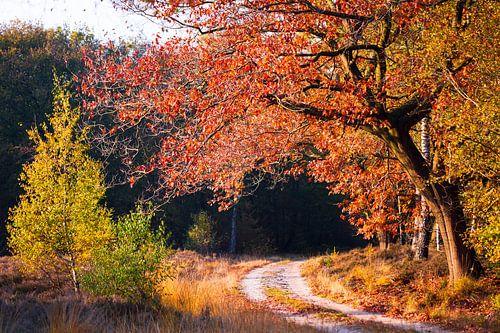 Herfst kleuren in het bos.