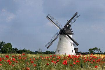 Kornblumenfeld mit Windmühle von Kurt Krause