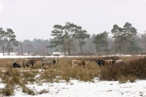 Winterdag in Nederland