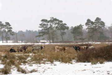 Winterdag in Nederland von Yorda Cornelissen