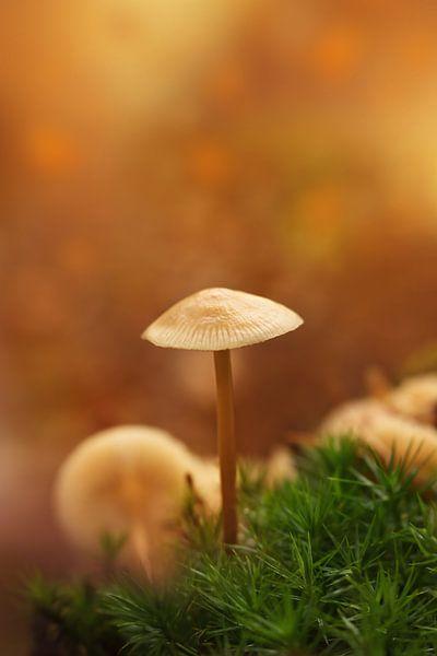 Magical autumn.... van LHJB Photography