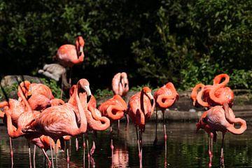 Flamingos van Klaus-Dieter Schulze