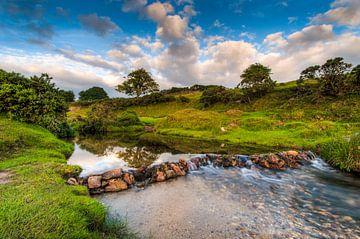 Beekje in een groen landschap van