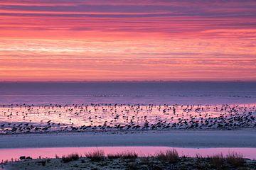 Scholeksters op het gekleurde wad - Natuurlijk Ameland van Anja Brouwer Fotografie