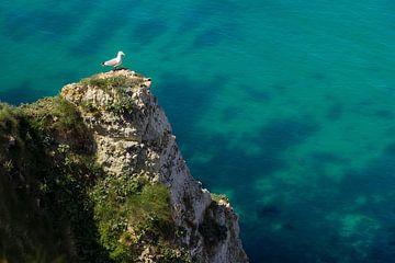 De meeuw op de klif van Nathan Marcusse