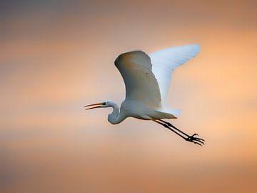 vol du coucher du soleil sur Ruud Peters