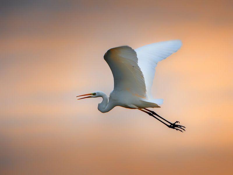 zonsondergang vlucht van Ruud Peters