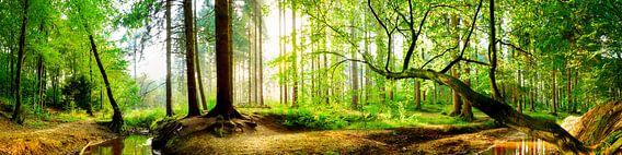 Idyllisch bos met beekje bij zonsopgang
