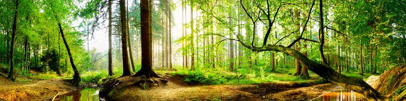 Idyllisch bos met beekje bij zonsopgang van Günter Albers