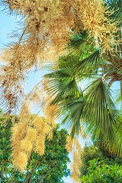 Groene palmbladeren van Anouschka Hendriks